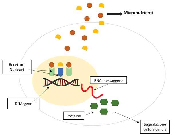 GE.FO. nutrition Srl: Micronutrizione Sequenziale