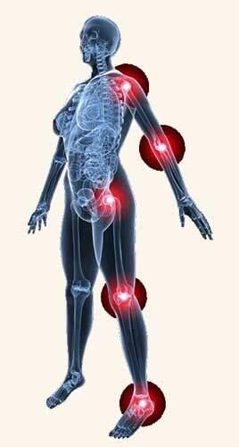 GE.FO. nutrition Srl: sistema muscolo-scheletrico con evidenza delle articolazioni